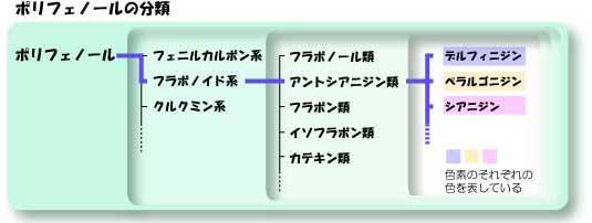 ポリフェノールの分類